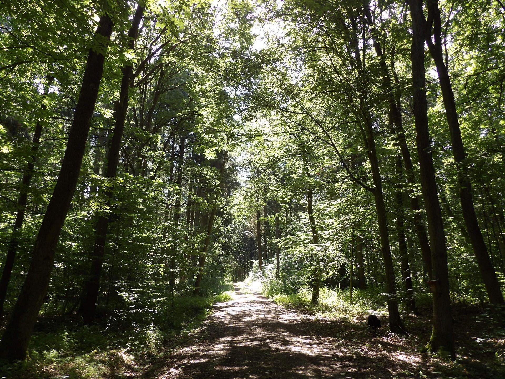 Neubronner Wald